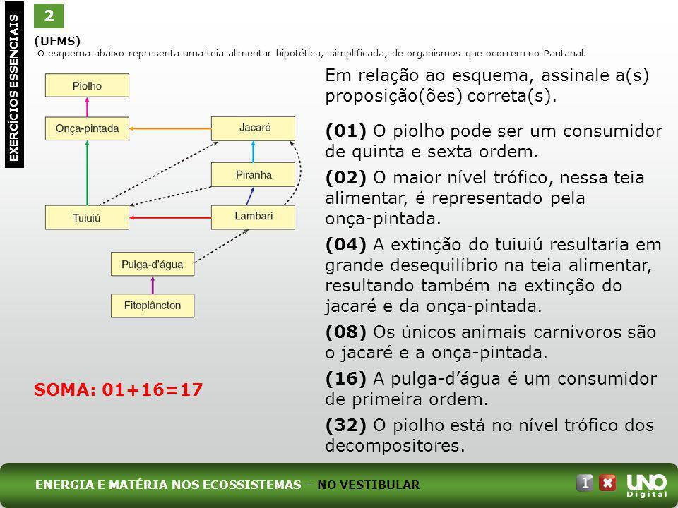 Em relação ao esquema, assinale a(s) proposição(ões) correta(s).