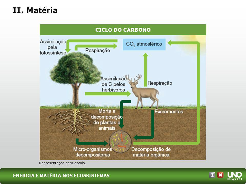 II. Matéria CICLO DO CARBONO Bio-cad-1-top-8 – 3 Prova