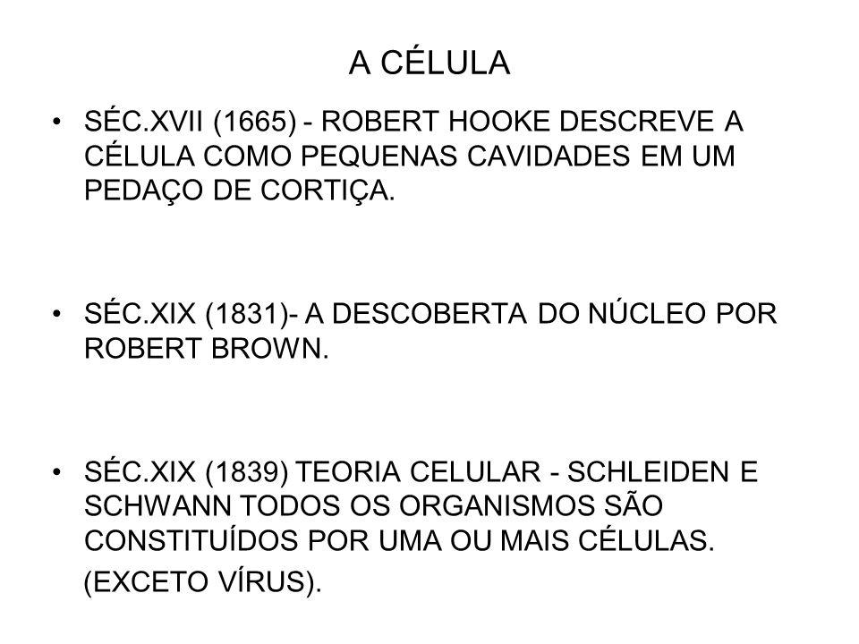 A CÉLULASÉC.XVII (1665) - ROBERT HOOKE DESCREVE A CÉLULA COMO PEQUENAS CAVIDADES EM UM PEDAÇO DE CORTIÇA.