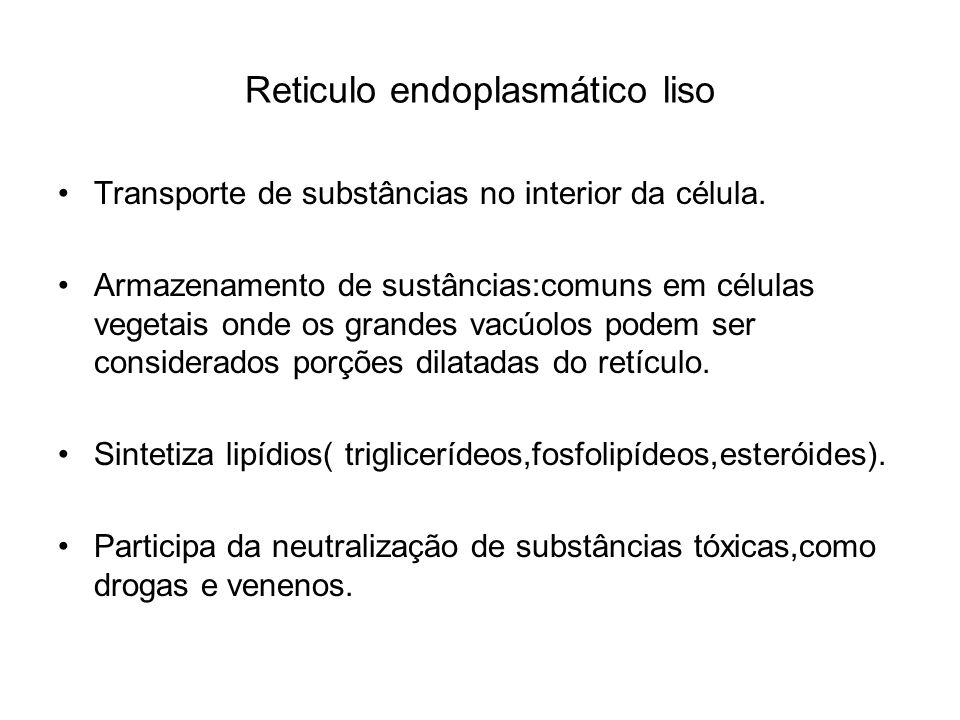 Reticulo endoplasmático liso