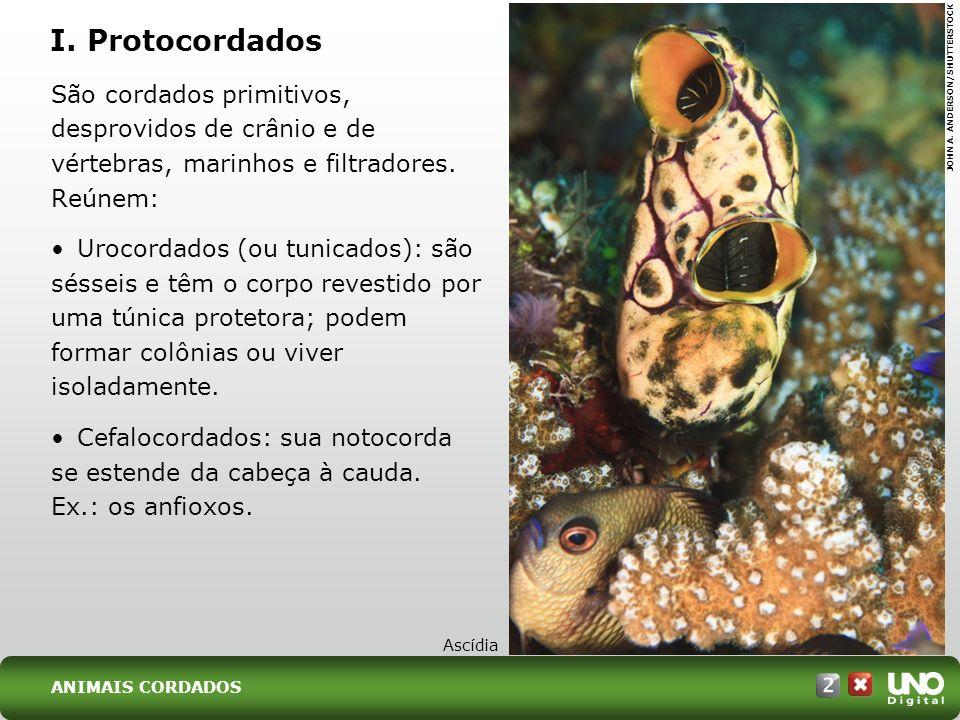 Bio-cad-2-top-5 – 3 Prova I. Protocordados. São cordados primitivos, desprovidos de crânio e de vértebras, marinhos e filtradores. Reúnem:
