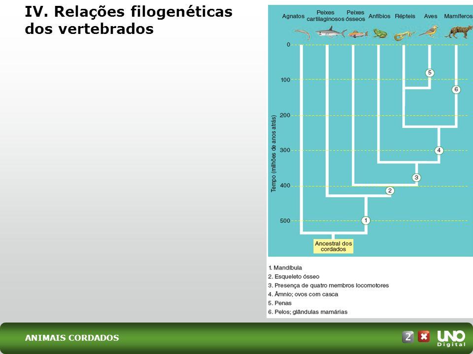 IV. Relações filogenéticas dos vertebrados