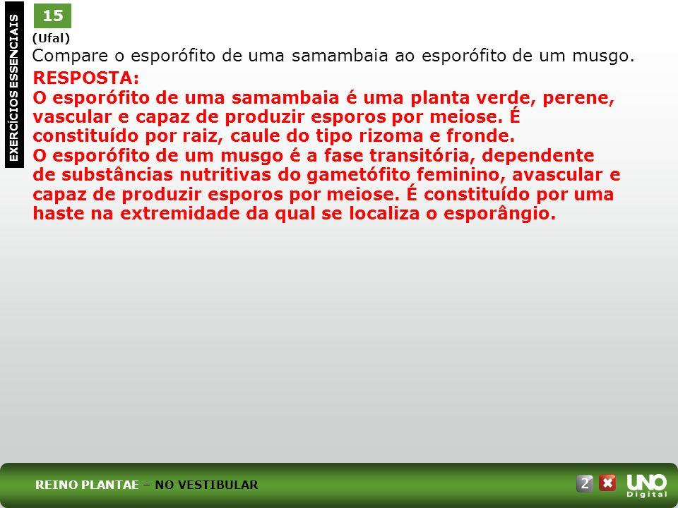 Bio-cad-2-top-2 – 3 Prova 15. (Ufal) Compare o esporófito de uma samambaia ao esporófito de um musgo.