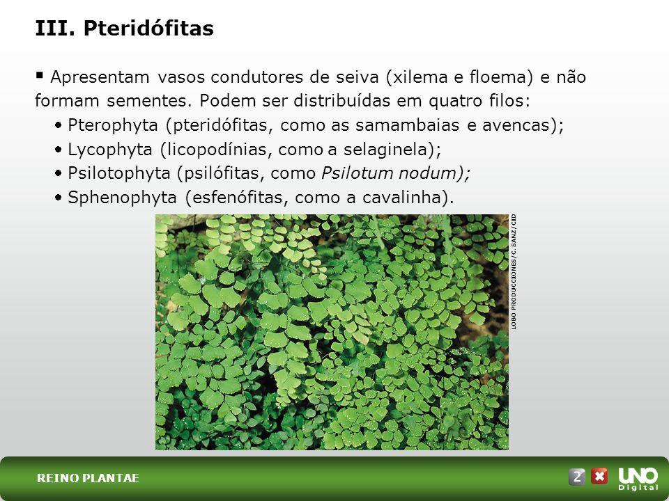 Bio-cad-2-top-2 – 3 ProvaIII. Pteridófitas.