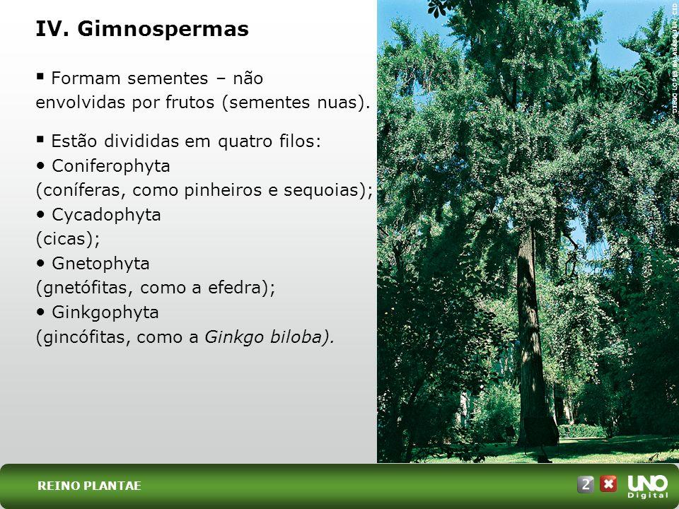 Bio-cad-2-top-2 – 3 Prova IV. Gimnospermas. DIEGO LOPES BALABASQUER/ CID. Formam sementes – não envolvidas por frutos (sementes nuas).