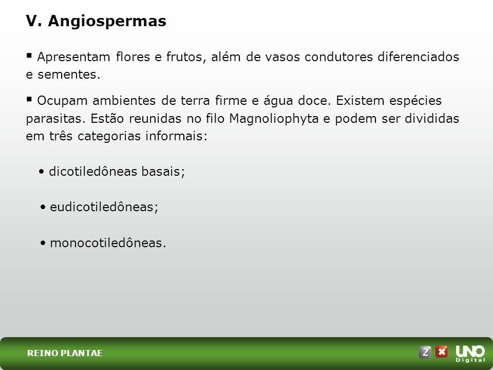 Bio-cad-2-top-2 – 3 ProvaV. Angiospermas. Apresentam flores e frutos, além de vasos condutores diferenciados e sementes.
