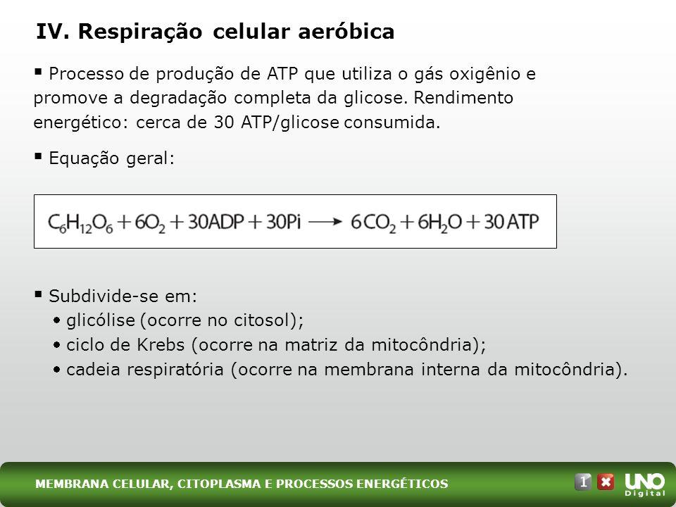 IV. Respiração celular aeróbica