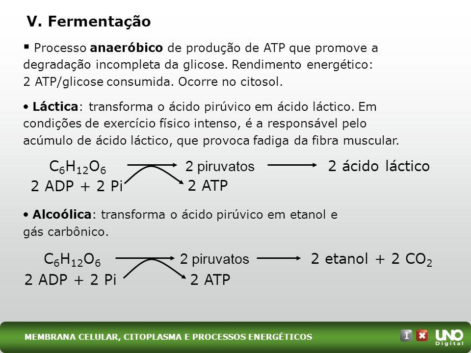 C6H12O6 2 piruvatos 2 ácido láctico 2 ADP + 2 Pi 2 ATP