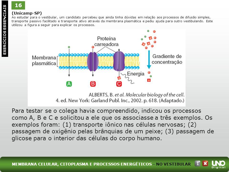 Bio-cad-1-top-2 - 3 prova 16.