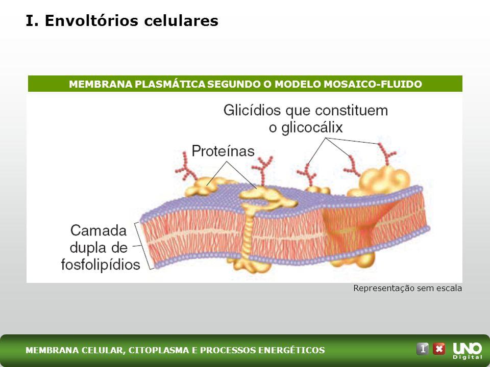 I. Envoltórios celulares