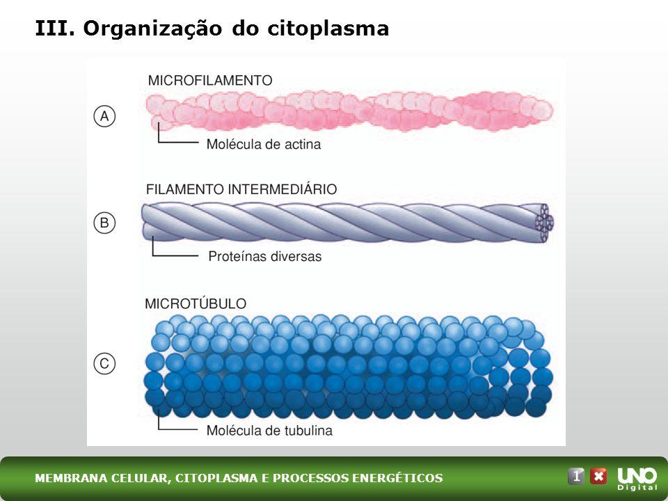 III. Organização do citoplasma