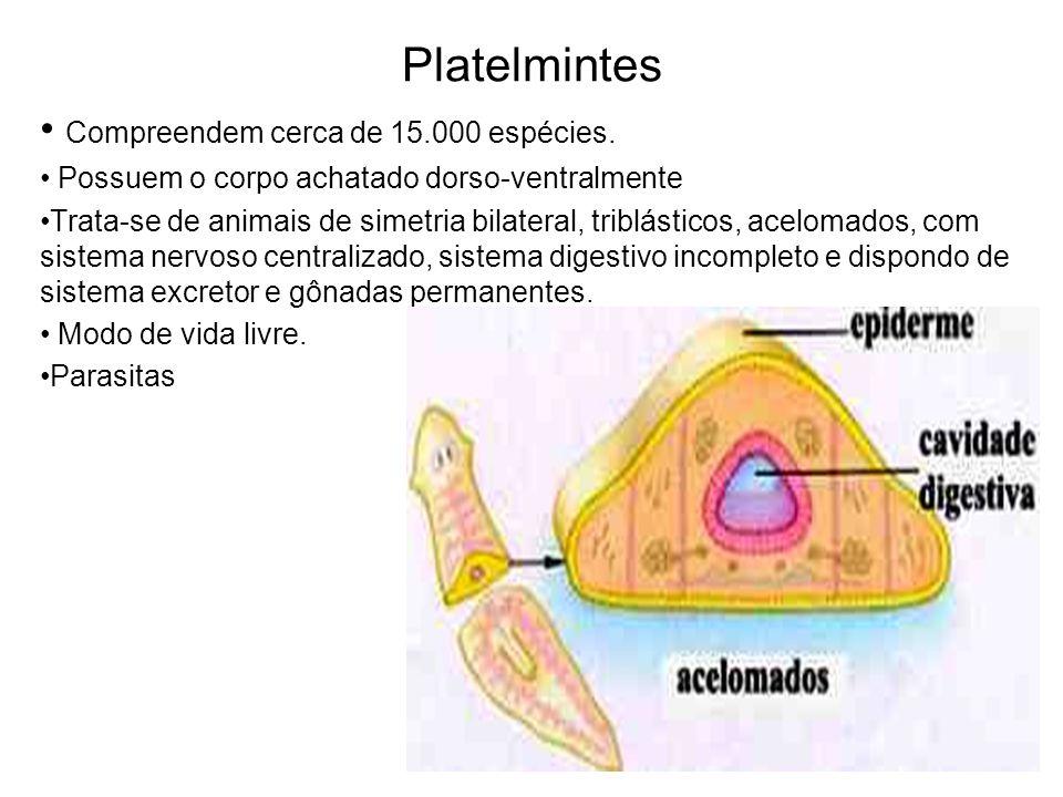 Platelmintes Compreendem cerca de 15.000 espécies.