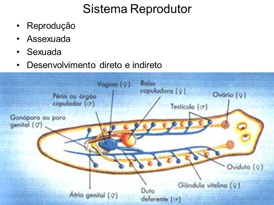 Sistema Reprodutor Reprodução Assexuada Sexuada