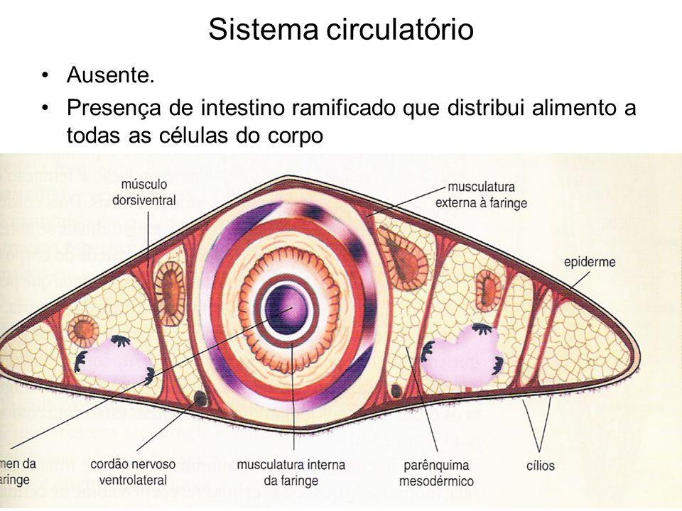 Sistema circulatório Ausente.