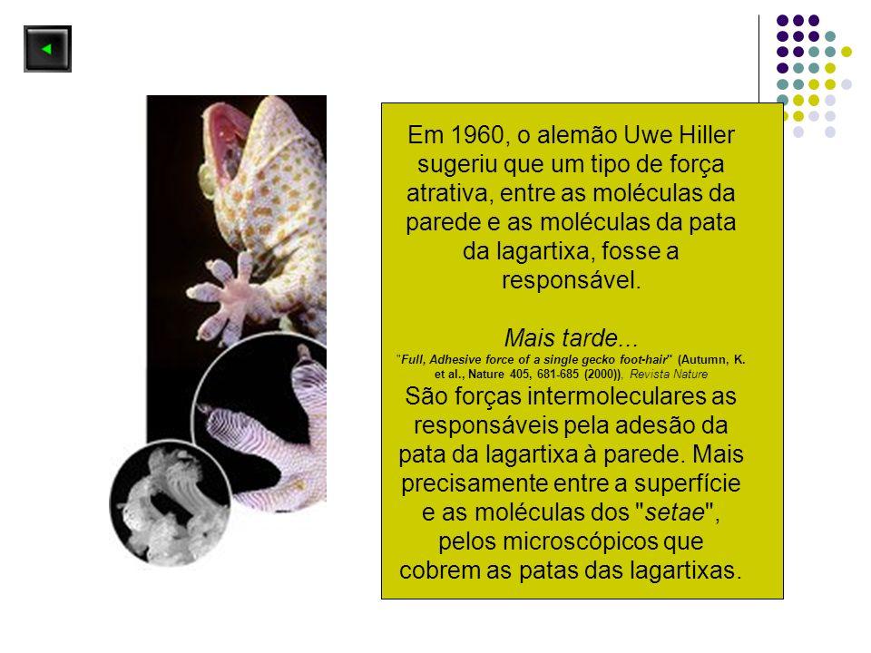 Em 1960, o alemão Uwe Hiller sugeriu que um tipo de força atrativa, entre as moléculas da parede e as moléculas da pata da lagartixa, fosse a responsável.