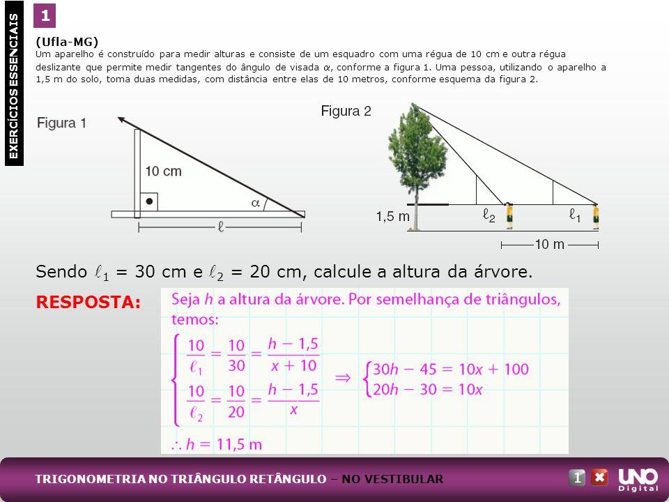 Sendo l1 = 30 cm e l2 = 20 cm, calcule a altura da árvore.