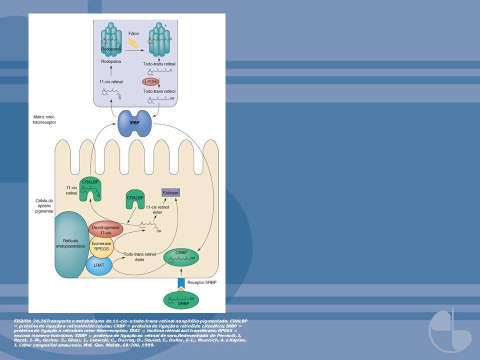 FIGURA 24.26Transporte e metabolismo de 11-cis- e todo-trans-retinal no epitélio pigmentado.