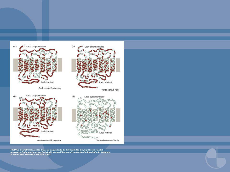 FIGURA 24.28Comparações entre as seqüências de aminoácidos de pigmentos visuais humanos.