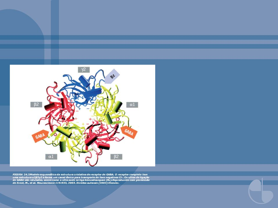 FIGURA 24.5Modelo esquemático da estrutura cristalina do receptor de GABA.