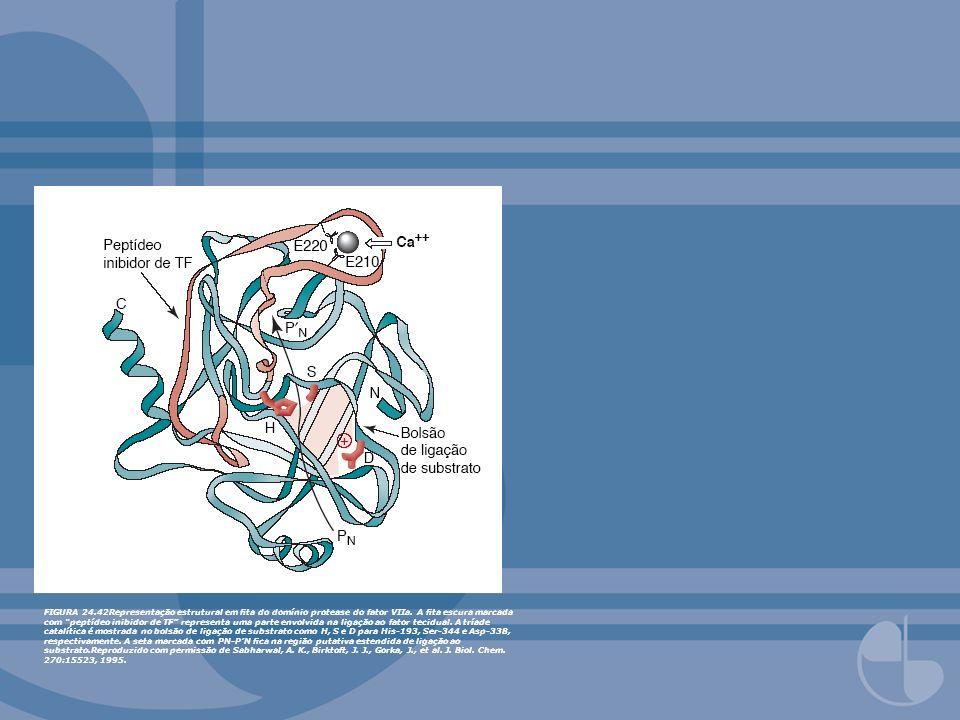 FIGURA 24.42Representação estrutural em fita do domínio protease do fator VIIa.