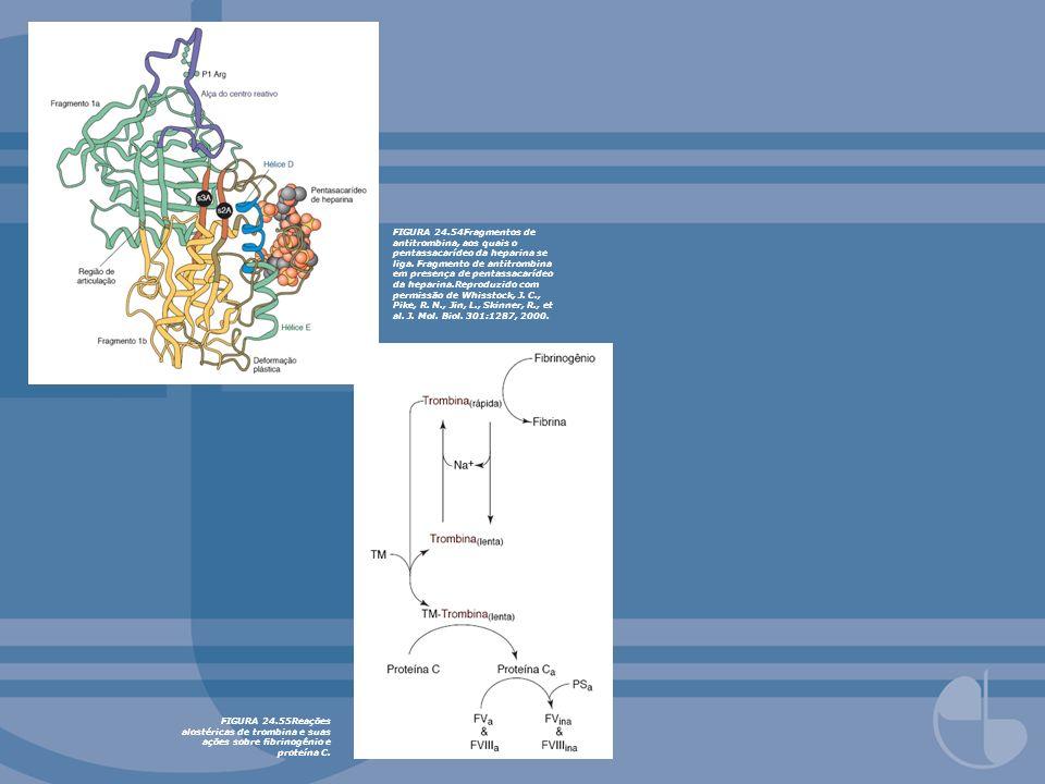 FIGURA 24.54Fragmentos de antitrombina, aos quais o pentassacarídeo da heparina se liga. Fragmento de antitrombina em presença de pentassacarídeo da heparina.Reproduzido com permissão de Whisstock, J. C., Pike, R. N., Jin, L., Skinner, R., et al. J. Mol. Biol. 301:1287, 2000.