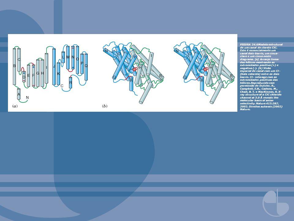 FIGURA 24. 6Modelo estrutural de um canal de cloreto ClC
