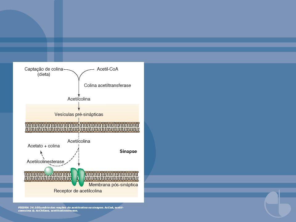 FIGURA 24. 10Sumário das reações da acetilcolina na sinapse