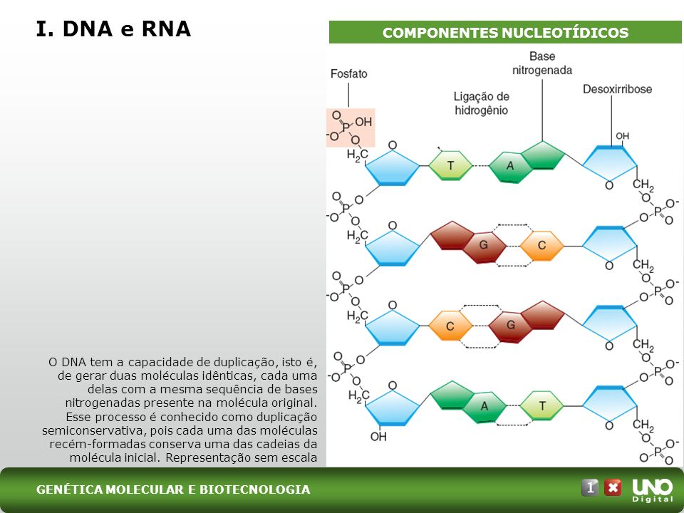 COMPONENTES NUCLEOTÍDICOS