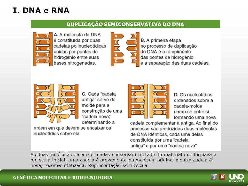 DUPLICAÇÃO SEMICONSERVATIVA DO DNA