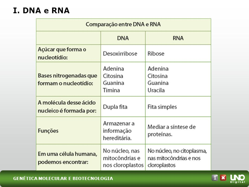 I. DNA e RNA Bio-cad-1-top-6 – 3 Prova