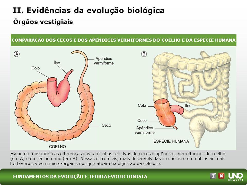 II. Evidências da evolução biológica