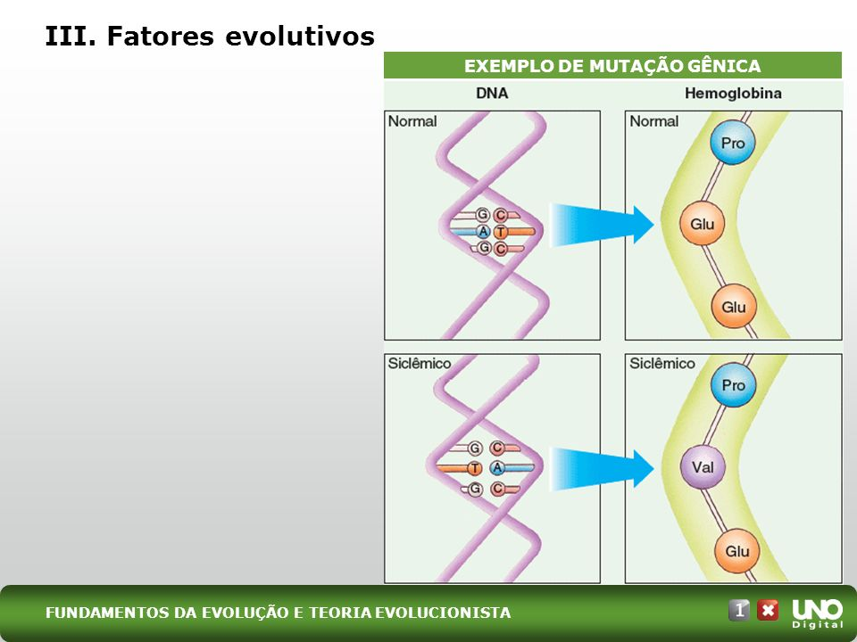 III. Fatores evolutivos