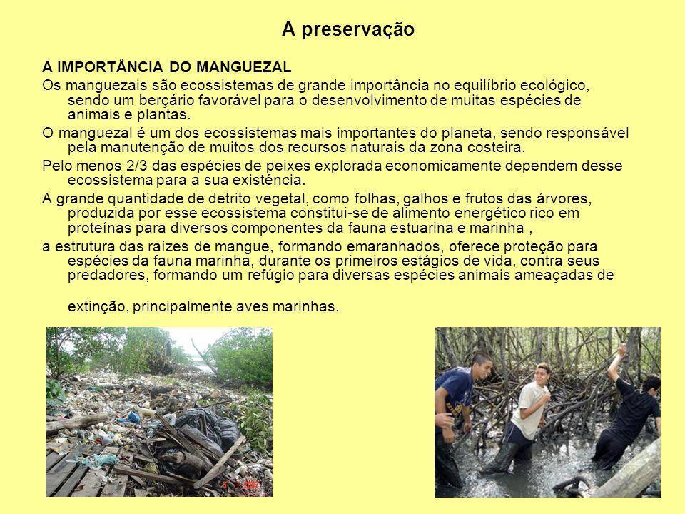 A preservação A IMPORTÂNCIA DO MANGUEZAL