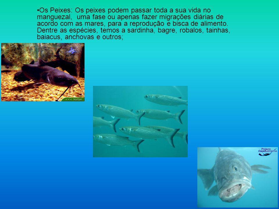 Os Peixes: Os peixes podem passar toda a sua vida no manguezal, uma fase ou apenas fazer migrações diárias de acordo com as mares, para a reprodução e bisca de alimento.