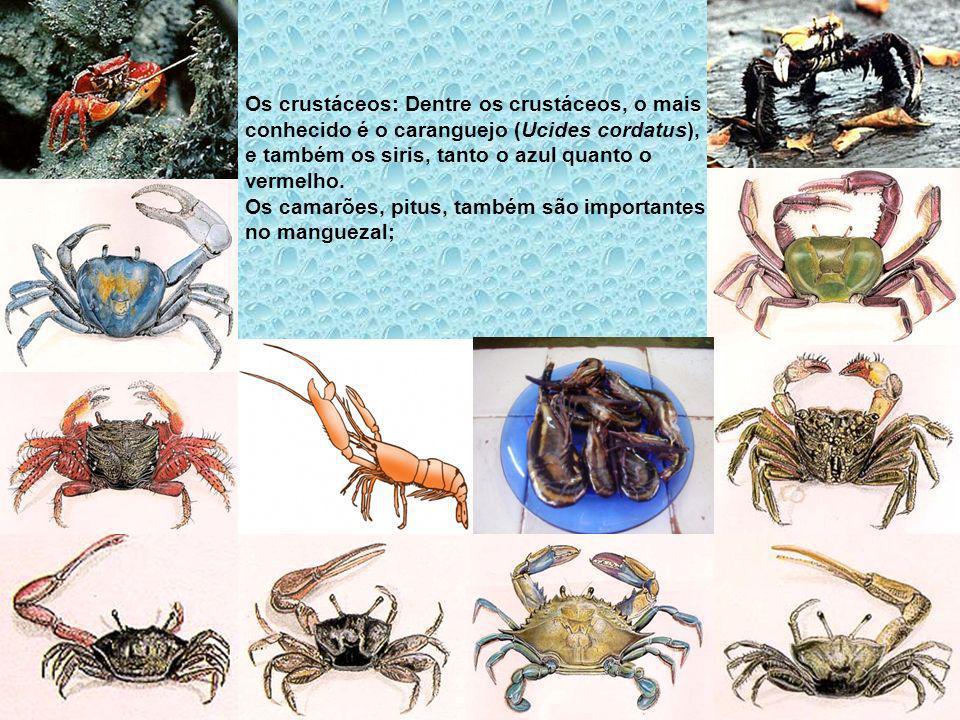 Os crustáceos: Dentre os crustáceos, o mais