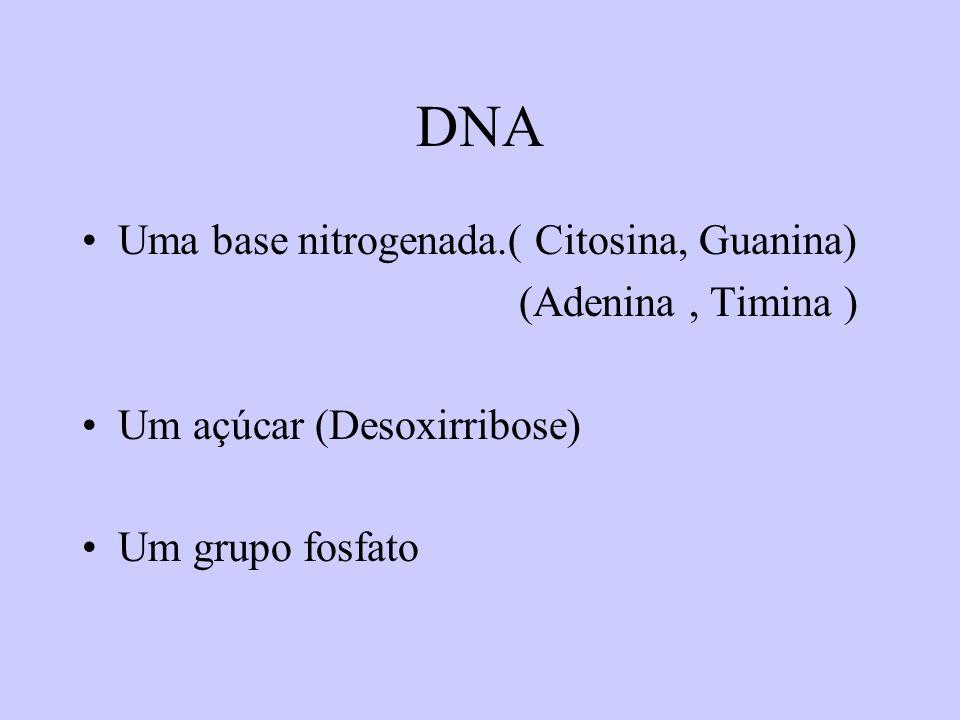 DNA Uma base nitrogenada.( Citosina, Guanina) (Adenina , Timina )