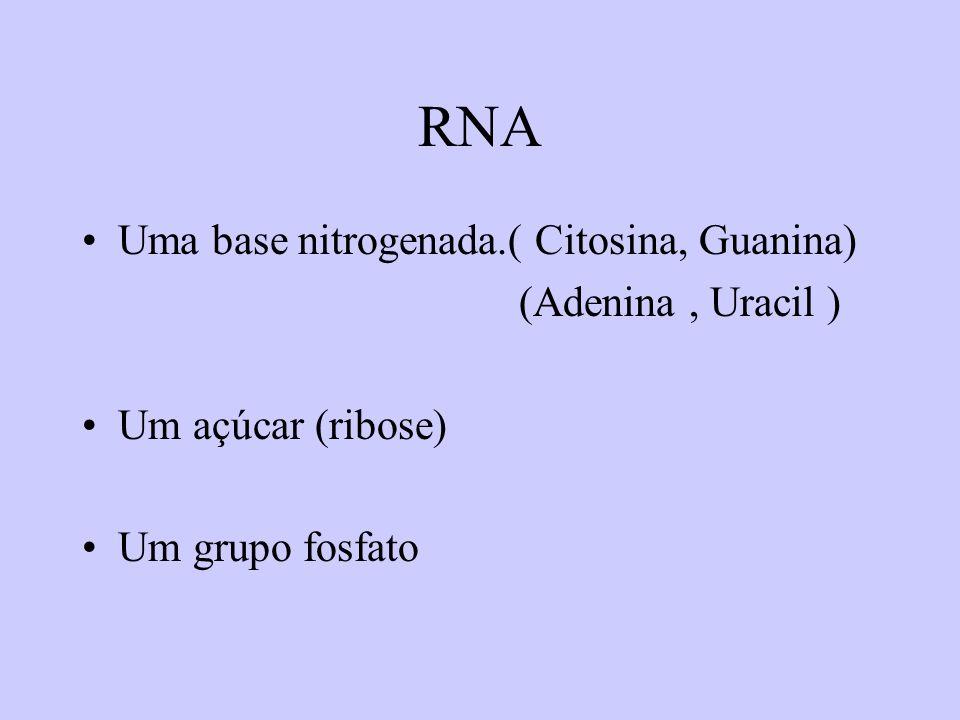 RNA Uma base nitrogenada.( Citosina, Guanina) (Adenina , Uracil )