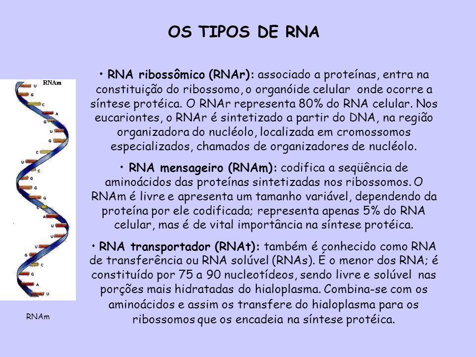 OS TIPOS DE RNA