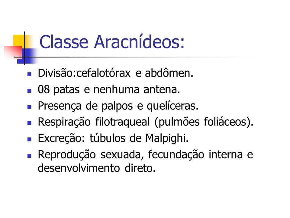 Classe Aracnídeos: Divisão:cefalotórax e abdômen.