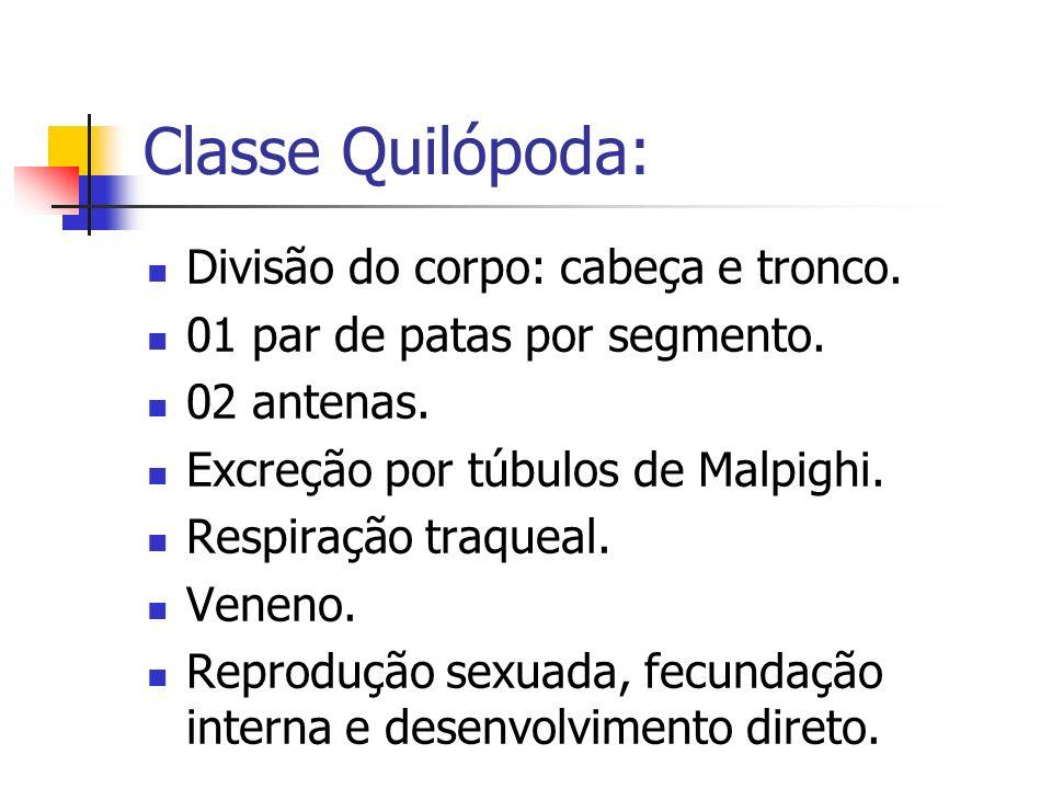 Classe Quilópoda: Divisão do corpo: cabeça e tronco.