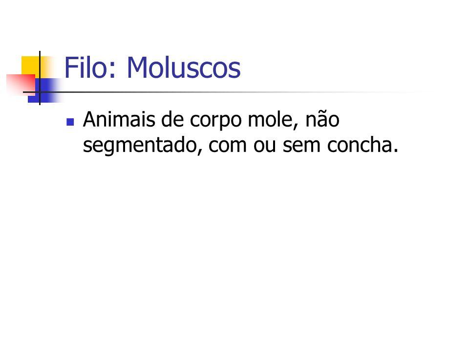 Filo: Moluscos Animais de corpo mole, não segmentado, com ou sem concha.