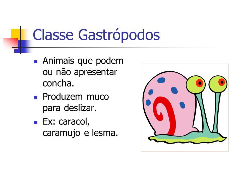Classe Gastrópodos Animais que podem ou não apresentar concha.