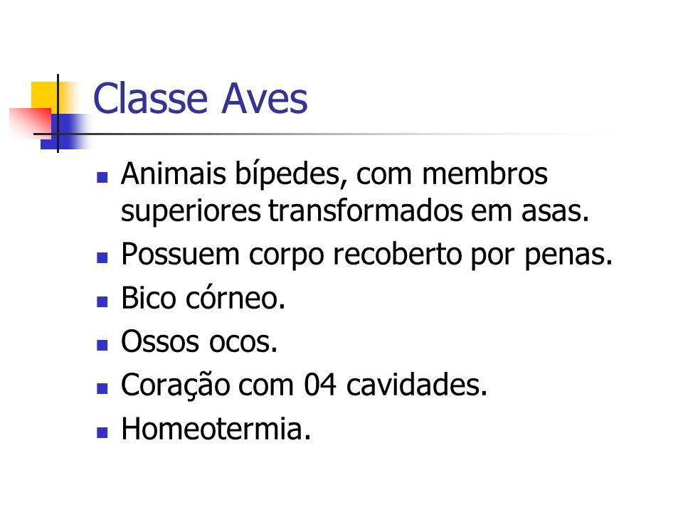 Classe AvesAnimais bípedes, com membros superiores transformados em asas. Possuem corpo recoberto por penas.