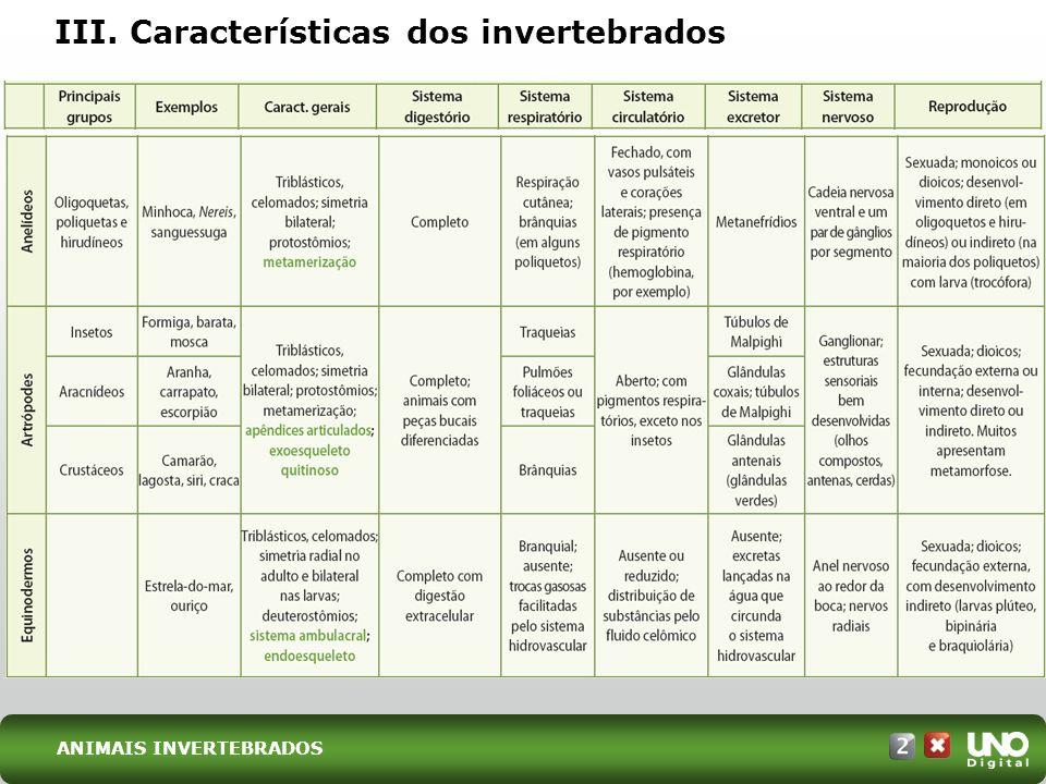 III. Características dos invertebrados