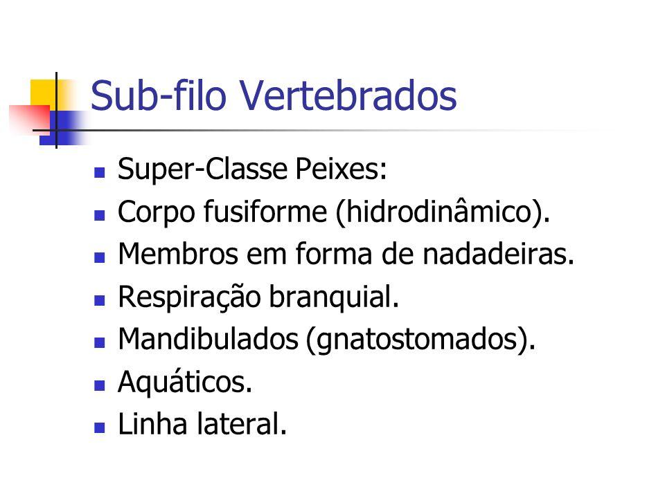 Sub-filo Vertebrados Super-Classe Peixes: