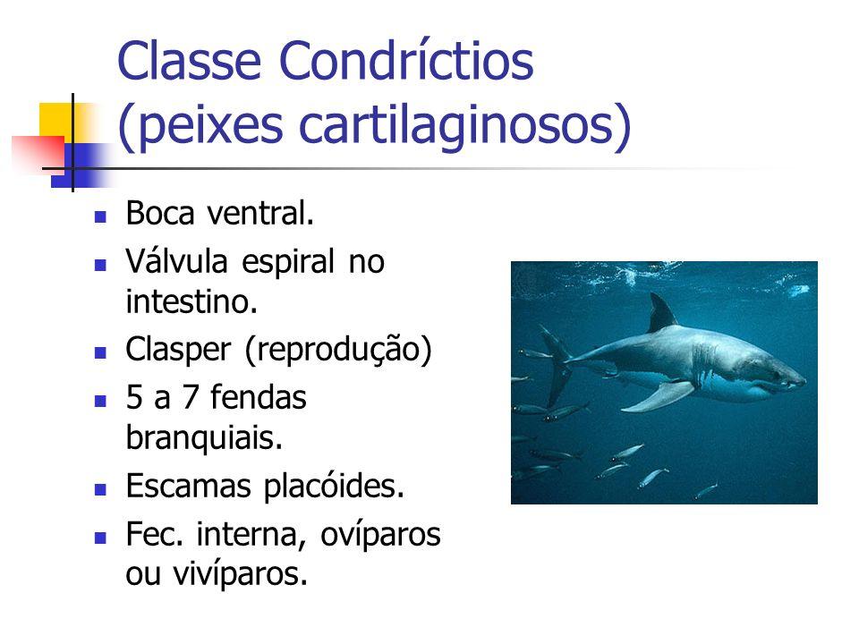 Classe Condríctios (peixes cartilaginosos)