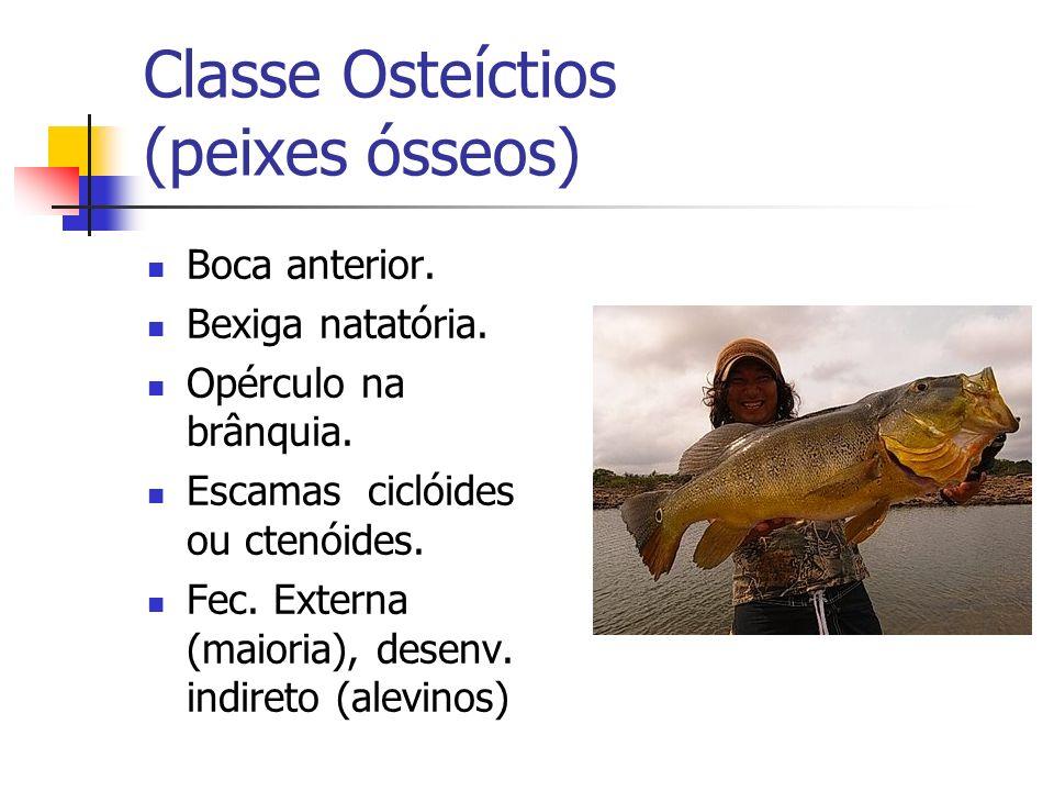 Classe Osteíctios (peixes ósseos)
