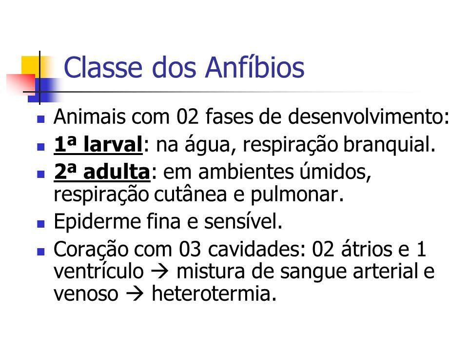 Classe dos Anfíbios Animais com 02 fases de desenvolvimento: