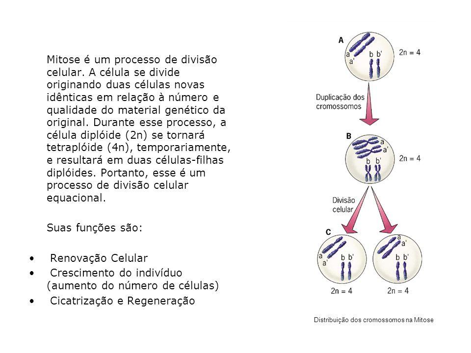 Crescimento do indivíduo (aumento do número de células)