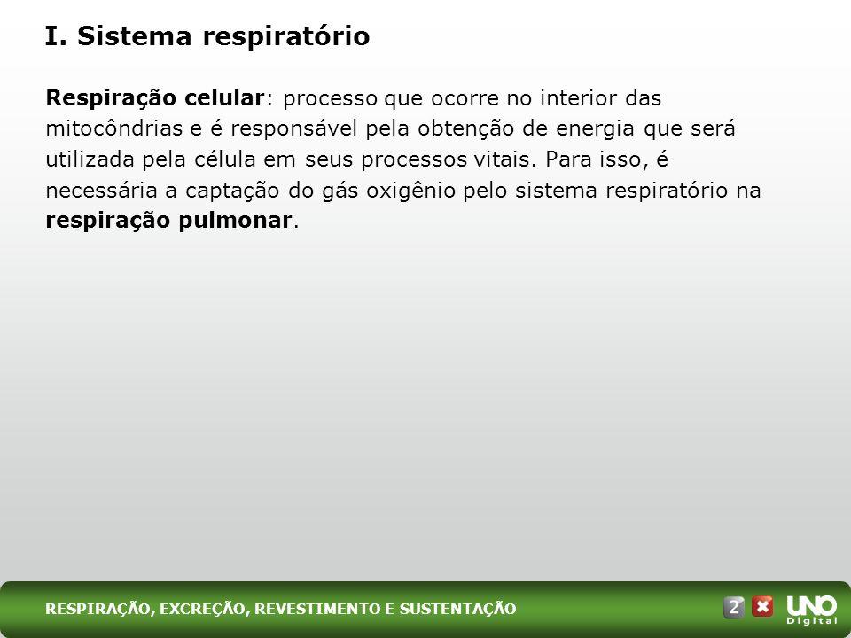 I. Sistema respiratório